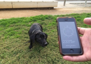 LA times dogs poop compass magnetic field.jpg